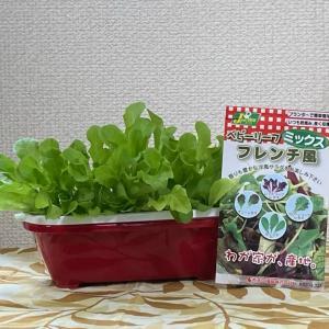 ウチの水耕栽培①