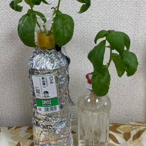 ウチの水耕栽培②