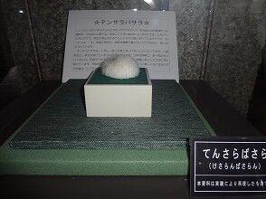 【毛玉】ケサランパサラン【妖怪図鑑】