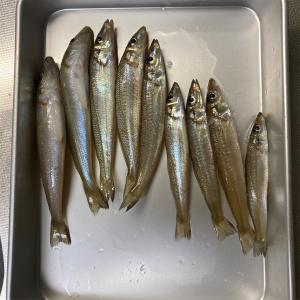 ちょい鱚釣り