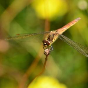 蜻蛉(2)