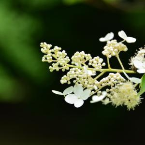 さびたの花