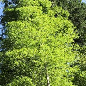竹の春(2)