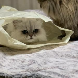 環境問題と猫