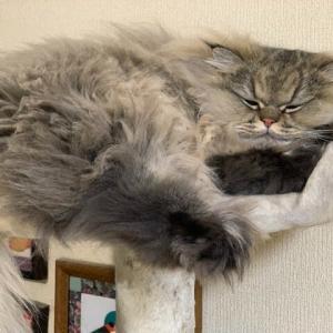 猫の足裏肉球問題