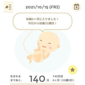 【妊娠記録】6ヶ月になりました♡*゜