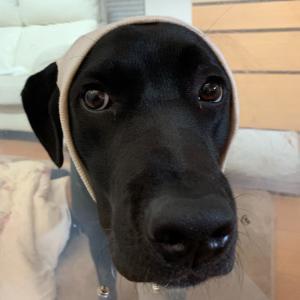 こんな時、どうやって愛犬を守りますか?