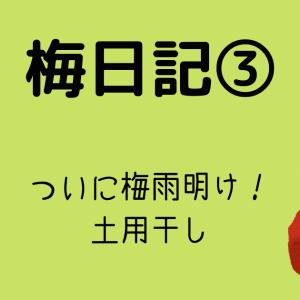 【梅日記③】ついに梅雨明け!土用干し