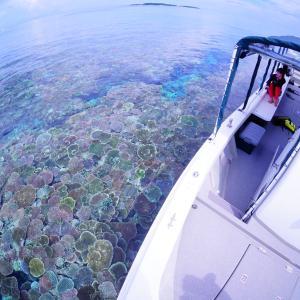 西表島旅行記③【半日シュノーケリングツアー】どこまでも広がる珊瑚畑っ!
