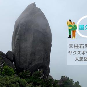 【屋久島登山】天柱石を目指して!ヤクスギランドをぬけて太忠岳に登ろう!