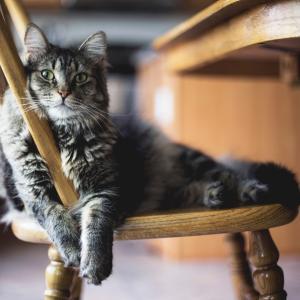 アニマルコミュニケーション〜猫とお話する