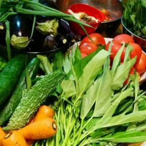 田舎から空心菜が届くようになって、嬉しいけど複雑