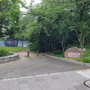 大物公園でD51 8を撮る/令和3年7月5日