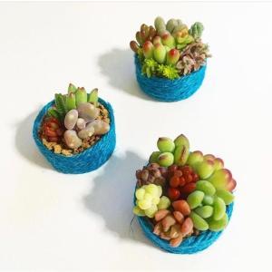 小さい多肉植物のカット苗でも寄せ植えしてインテリア雑貨が作れます