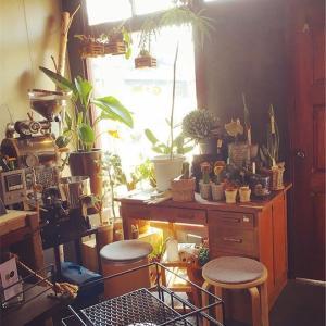 明石 植物と美味しい自家焙煎珈琲を楽しめるお店 「GASSE (ガッセ)」