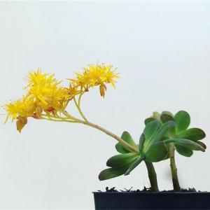 育てやすくて増えやすい 多肉植物おすすめベスト3をご紹介