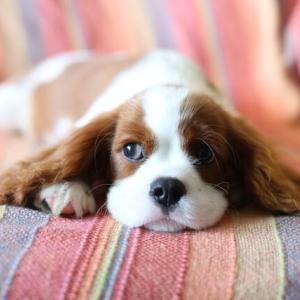【画像】「犬のこういうところ本当に好き」ツイートが話題w反応まとめ