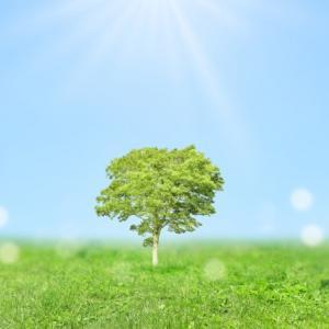 【生き方】自分につながり地球とつながる、優しい生き方