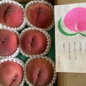 念願のマルミツ農園の桃をお取り寄せ!