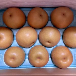 梨の名産地!千葉県市原市の立派で美味しい豊水の梨
