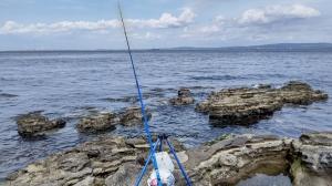 観音崎、久々の大物ヒットも海藻のせいで…