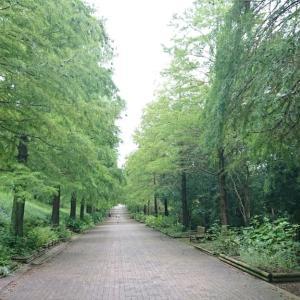ジョギング散策〜播磨中央公園から闘龍灘〜