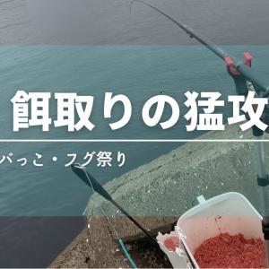 【餌取りの猛攻】サバっことフグまみれの湾内