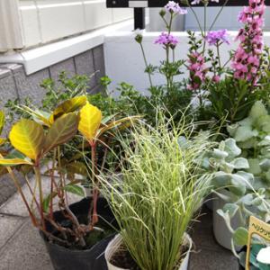裏庭改造の記録② 【本当に小さい庭】グリーンを少し追加/ラダーとピックを飾りました