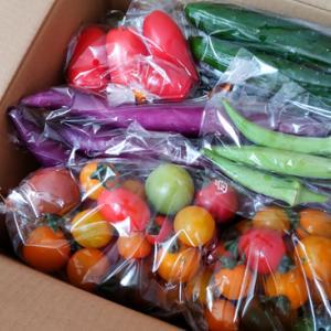 クラウドファンディングのお野菜が届きました / 乙幡農園 / おっぱたテック
