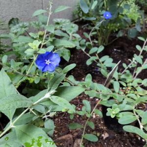裏庭の記録⑧ 梅雨後の様子 / このつる性の植物は何だろう?