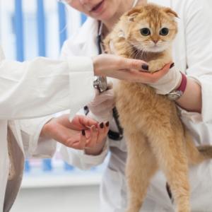 【体験レポ】猫と赤ちゃん&妊婦が一緒に暮らす時の注意点 その1