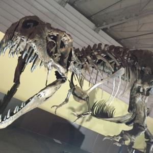 恐竜大好き歴3年!5歳の息子がおすすめする恐竜TOP10