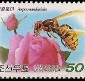 アレルギーの話-4.ハチ毒アレルギー