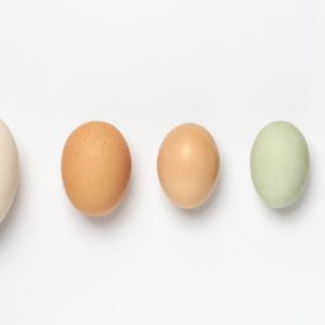【自己啓発はビジネスに必要?】次世代起業家セミナー【5つの卵】