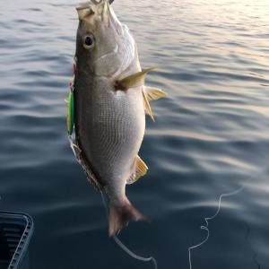 熊本天草西海岸 落とし込みロッドを買ったので仕事を休んで釣りに行ってみた
