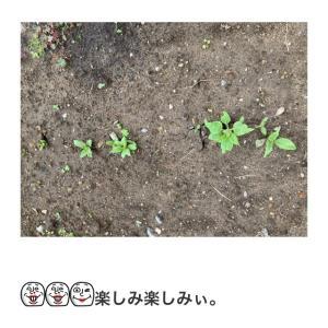 待ちに待った開花(^-^)