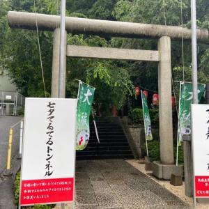 不思議な世界に通じているかもしれない!田無神社(・∀・)龍神様パワー!みなぎってます☆