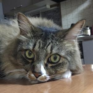 猫の健康診断の結果が判明→【要再検査】でした(>_<)