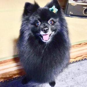 黒い犬の描き方~愛犬が黒い犬なのですが、黒い犬って描くのが難しいですか?