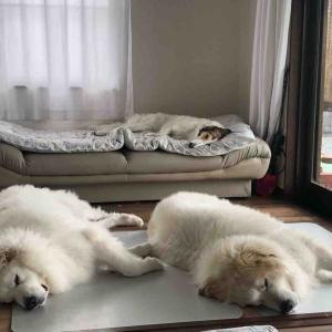 それぞれに寝心地のいい場所で💤
