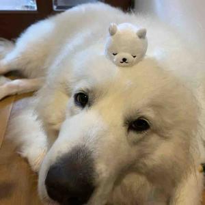 ジニーのコピー犬❓