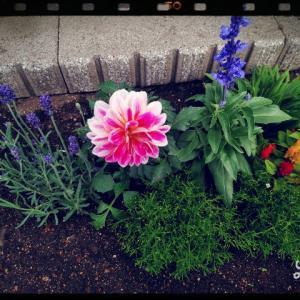 我が家の花達の成長と変化✨