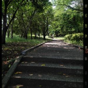 初夏のお散歩タイム