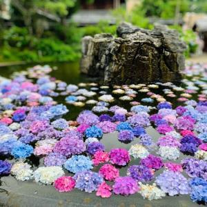 紫陽花と温泉