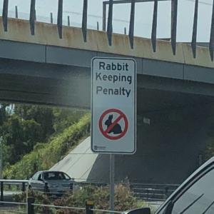 QLD州とウサギちゃん