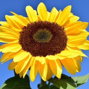 インナーチャイルドの癒し☆ご感想「たとえていうなら向日葵の様な」