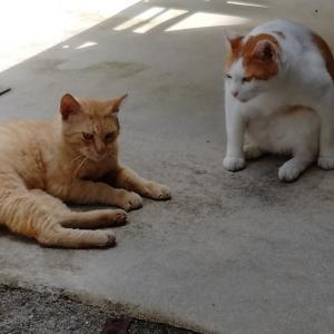 猫さんと夫婦仲の関係