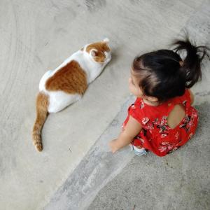猫とまごちゃん