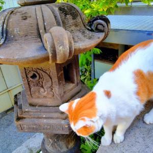 猫とゴーヤ