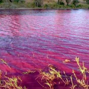「呪い?血液?」死海近くの池が赤く染まってしまう、原因は不明